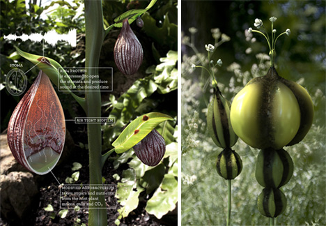 Image: Acoustic Botany, David Benque